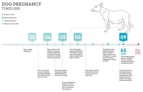 gestation period for pomeranians understanding the gestation period for dogs health timeline