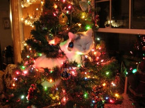 funny pictures of cats and christmas trees cat in tree