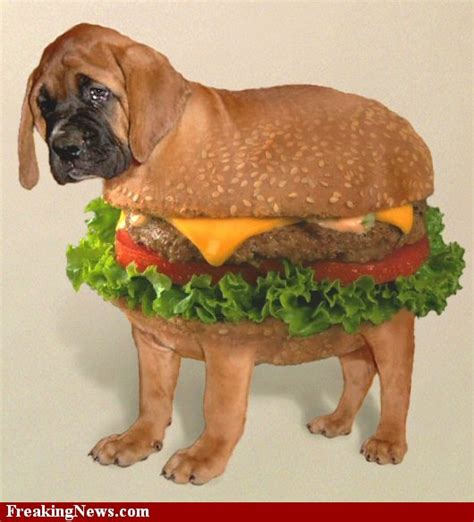 dogs and hamburgers sci 10 photoshop dogs