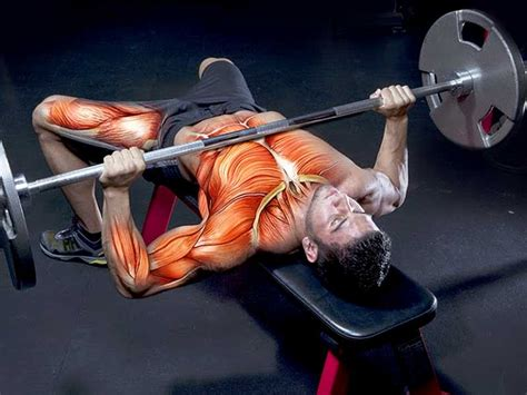 how can i bench press more how can you load more weight during bench press exercise