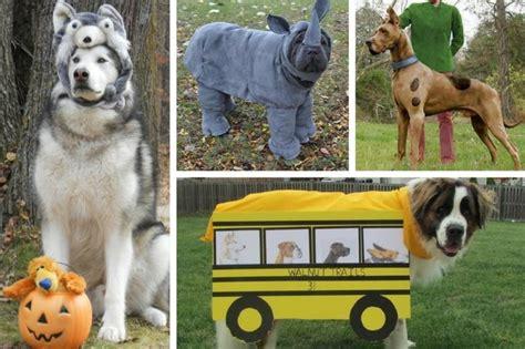 costumes   perfect  big dogs cutenesscom