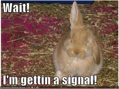 Funny Easter Bunny Memes - album funny pictures bunny rabbit antennae7