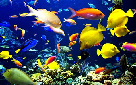3d wallpaper water fish ocean life fishes under water image new hd wallpapers