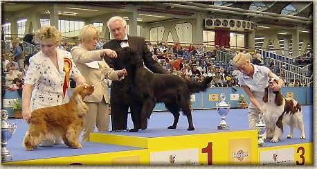 tamerlan golden retrievers world winner show 2002 amsterdam nl