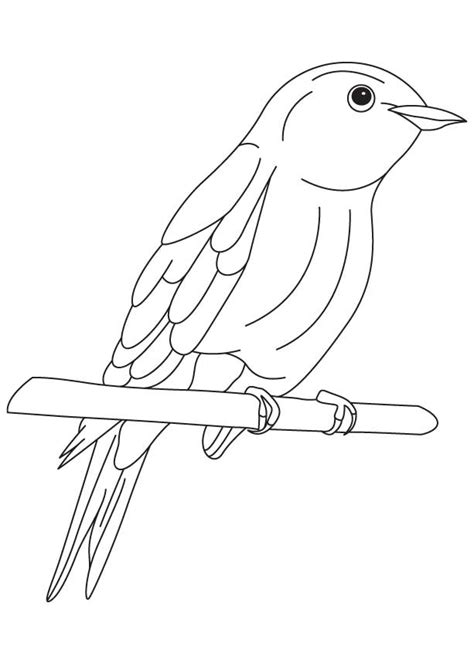 how to draw mountain bluebird