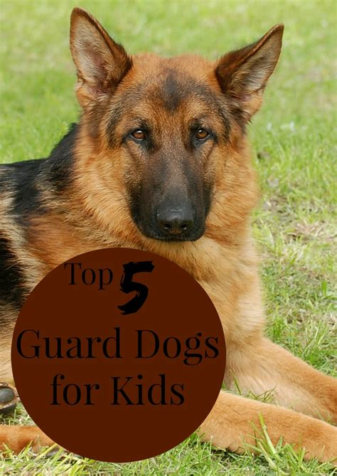is for dogs top 5 guard dogs for dogvills