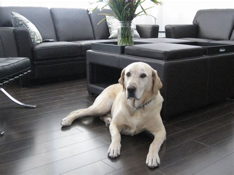 is laminate flooring suitable for dogs