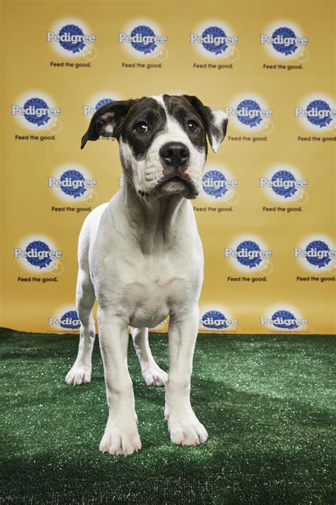 puppy bowl 2017 highlights puppy bowl 2018 live updates highlights results and dogs