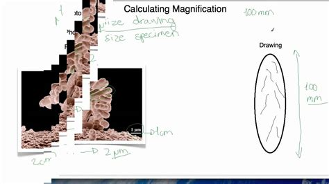 biological magnification and bioaccumulation worksheet answers biological magnification worksheet answers worksheets tutsstar thousands of printable activities