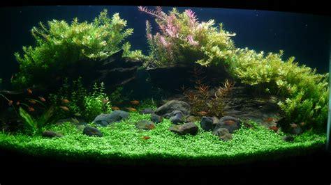 aquascape aquarium affable aquarium woody aquascape