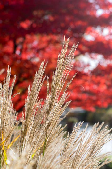 wann fängt herbst an herbst in planten un blomen pentaxians