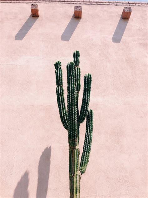 Vsco Search Vsco Desert Botany Hannahklemm
