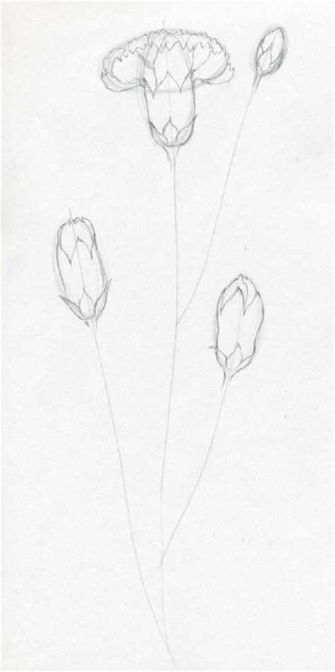 Sketches To Do by How To Draw Carnation