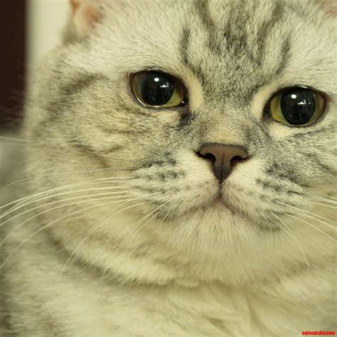 breathing heavy heavy breathing cats hq pictures of cats and kittens free pictures of