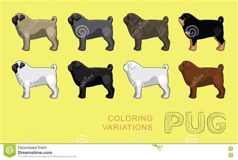 pug coat colors pug coloring variations vector illustration stock vector image 78848846