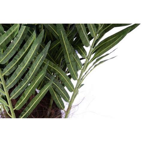 piante finte da arredo piante finte artificiali da arredo interno palma da cocco