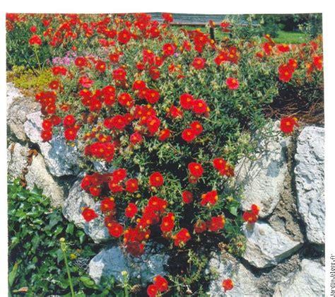 Pot Pour Plante Verte by Plante De Rocaille Pot Pour Plante Verte Maison Retraite