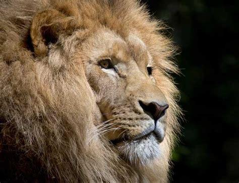 imagenes de animales zoologico cuidador de animales de zool 243 gicos idea cursos de animales