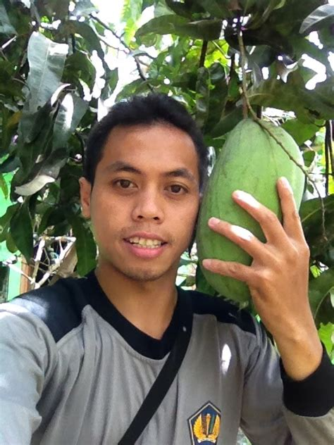 Bibit Sawo Raksasa mangga mahathir mangga raksasa mudah berbuah kebun bibit buah