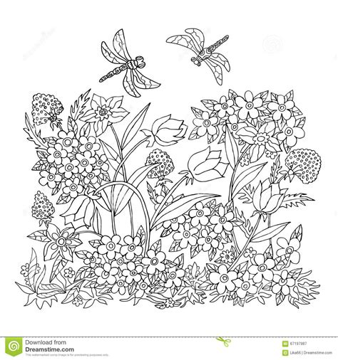 coloring pages field of flowers 手凹道彩色插图 反重音着色页 向量例证 图片 67197987