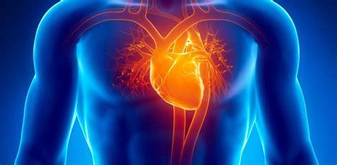 imagenes medicas de corazon coraz 243 n noticias y art 237 culos