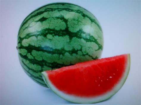 mewarnai gambar buah semangka mewarnai gambar