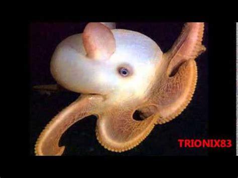 imagenes raras del fondo del mar animales extra 241 os animales del fondo del mar extra 241 os