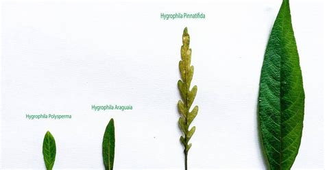 jenis nama tanaman aquascape alam ikan