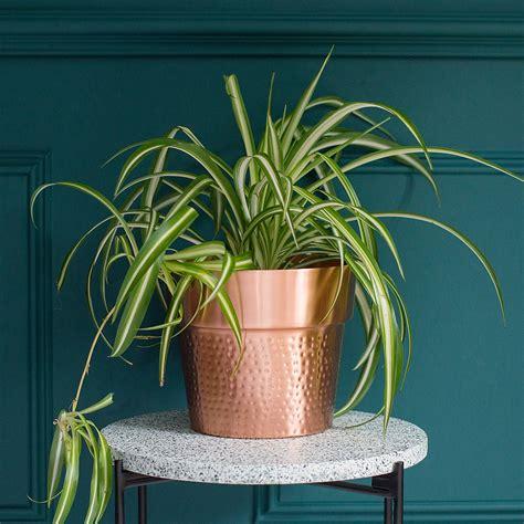 jacob copper plant pot audenza