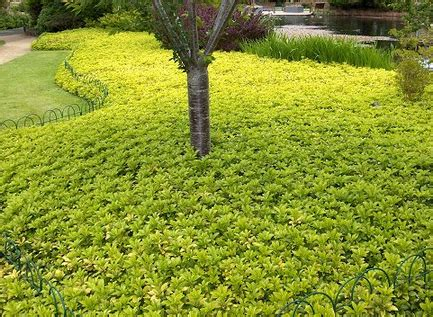 How To Make A Backyard Putting Green Lovely Ground Cover Landscaping 7 Ground Cover For Shady