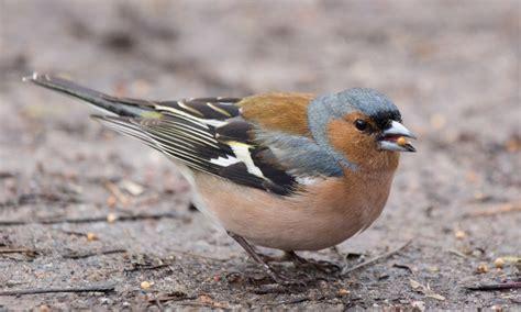 Птица долгоносик фото