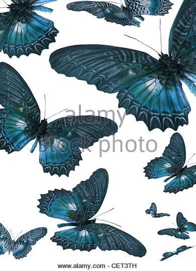Sc Myrina Butterfly Top Stok White lacewing stock photos lacewing stock images alamy