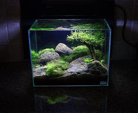 pesci volanti mediterraneo mini aquarium acquariando consigli per acquari con