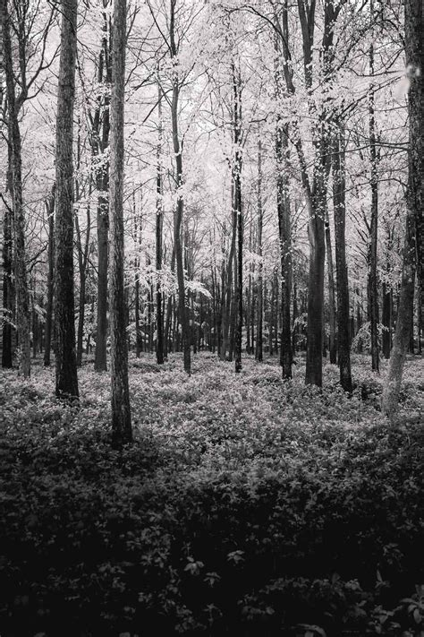 tumblr themes photography black and white static backgrounds image photography tumblr black and