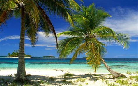 nature landscape palm trees beach island sea