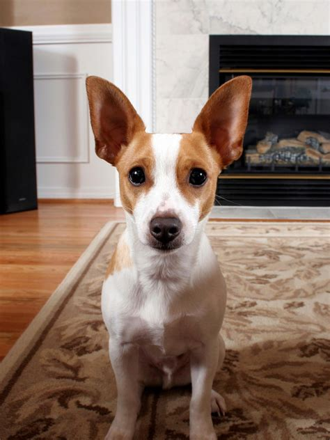 Pet Home Decor 12 tips for pet friendly decorating diy