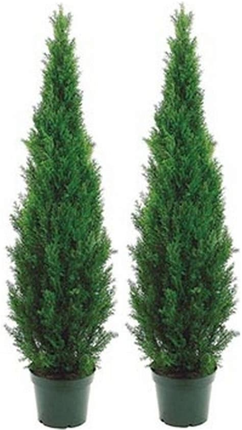 two 5 foot outdoor artificial cedar topiary trees potted