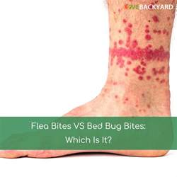 bed bug vs flea bites pictures www imgkid the