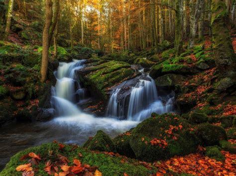 volon vill france november autumn rocks  green moss