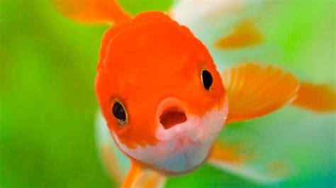 los peces de la nombres para peces