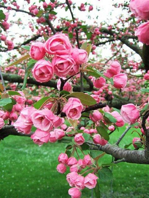 Fleurs Odorantes Pour Balcon by Carte Magnolia Quot Couture Quot Fleurs Fleur