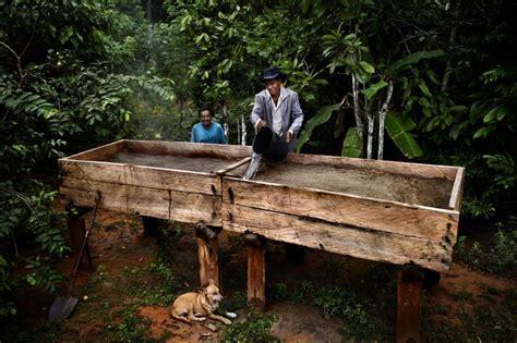 el bosque de morogoro 1535402865 fotos enemigos del hambre madrid el pa 205 s