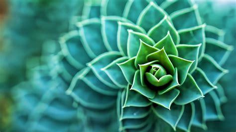 succulents plants macro wallpaper jpg  kb
