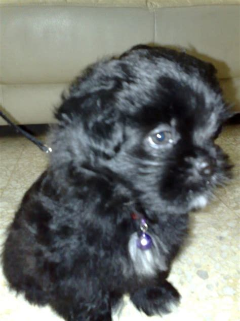 spca dogs for adoption small puppy breeds picture
