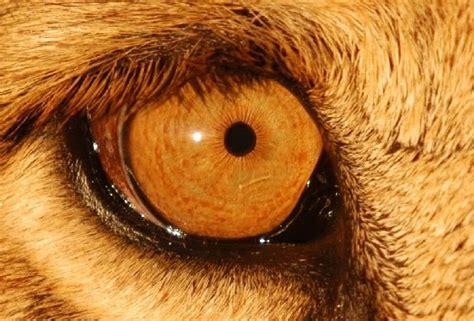 imagenes ojos de animales ojos de animales im 225 genes hd taringa