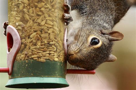 easy tips for a squirrel proof bird feeder