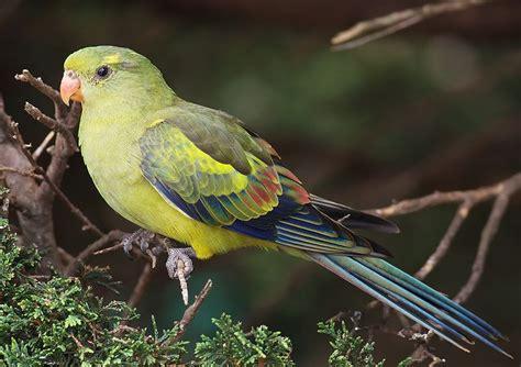 Buys A Parakeet by Beautiful Birds Beautiful Nature Photo 23812298