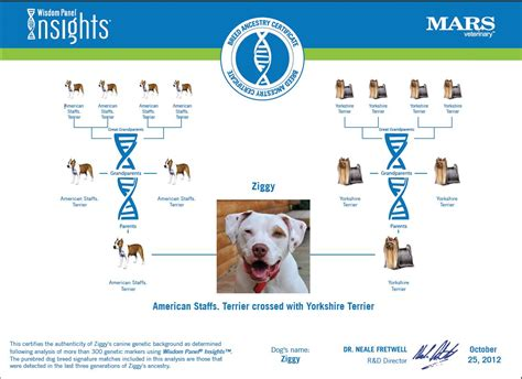 dna test for dogs dna breed testing breeds picture