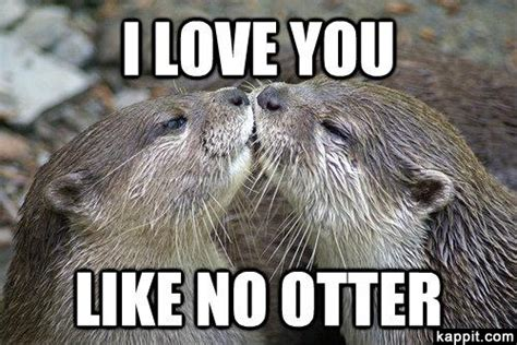 Otter Meme - i love you like no otter