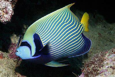 kehidupan  bawah laut kehidupan bawah laut